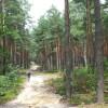 Cóż-jest-piękniejsze-niż-droga-w-lesie