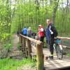 Na mostku w Lesie Kabackim